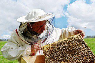 Fiche métier Apiculteur Apprendre  Formation Abeilles, miel, ruche,