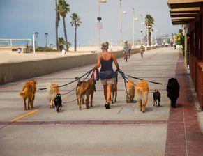 Les métiers canins