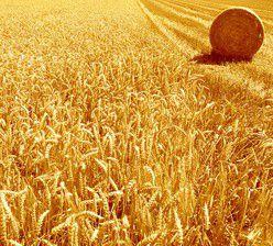 Conseiller agricole