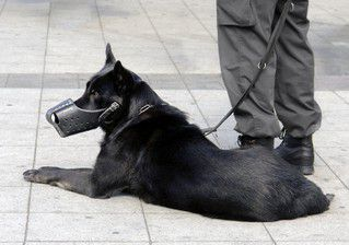 Comportementaliste canine